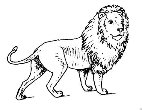 Löwen Malvorlagen Drucken