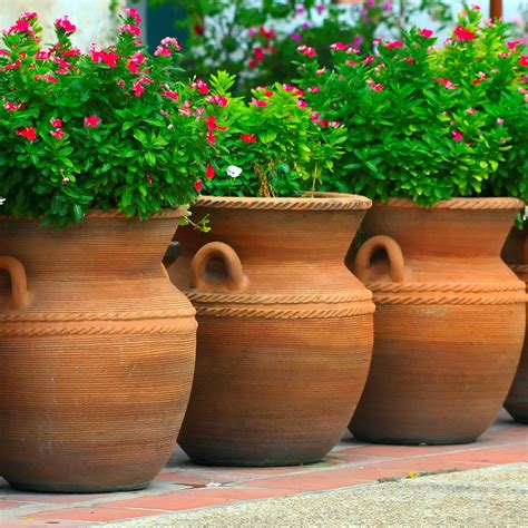 Large garden pots and containers Image