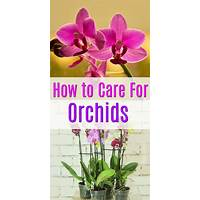 Lovely orchids growing care guide coupon codes