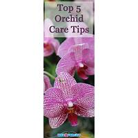 Lovely orchids growing care guide scam