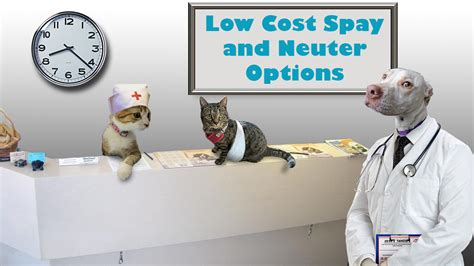 Low Cost Spay And Neuter Bentonville Ar