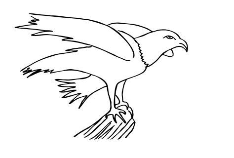 Malvorlage Adler Kostenlos