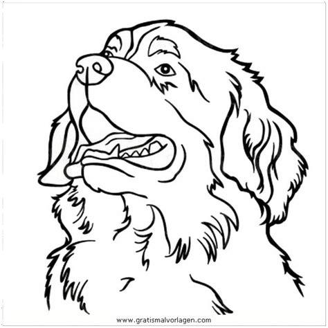 Malvorlage Berner Sennenhund