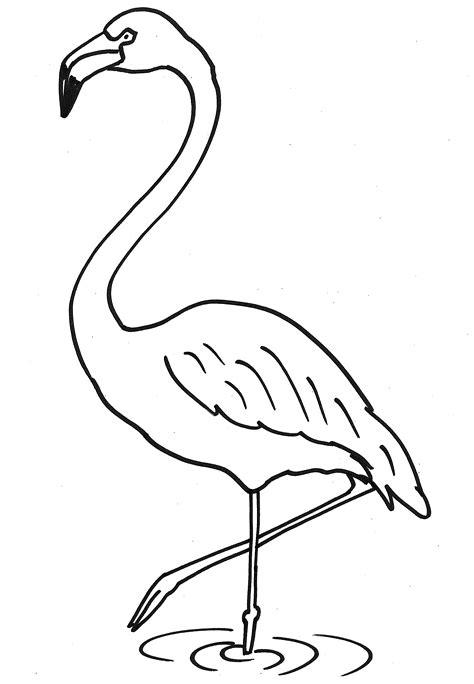 Malvorlage Flamingo Zum Ausdrucken