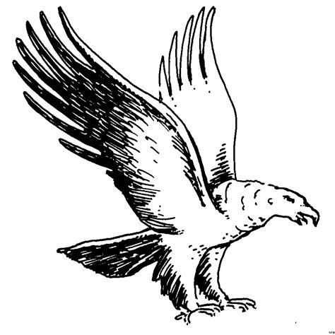 Malvorlage Greifvogel