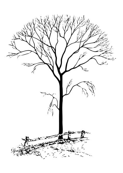 Malvorlage Kahler Baum