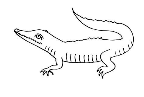 Malvorlage Kostenlos Krokodil