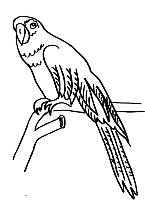 Malvorlage Papagei Kostenlos