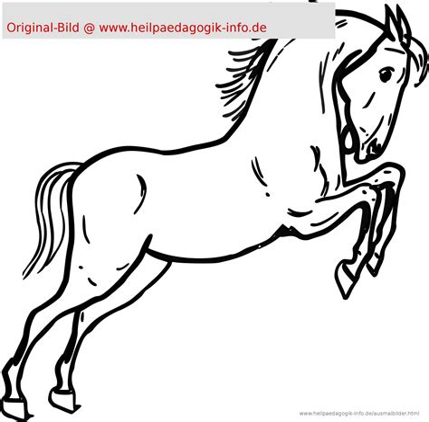 Malvorlage Pferdekopf Einfach