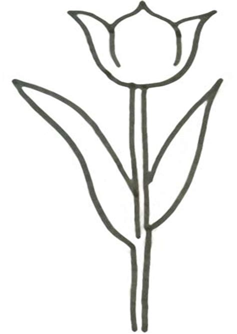 Malvorlage Tulpe