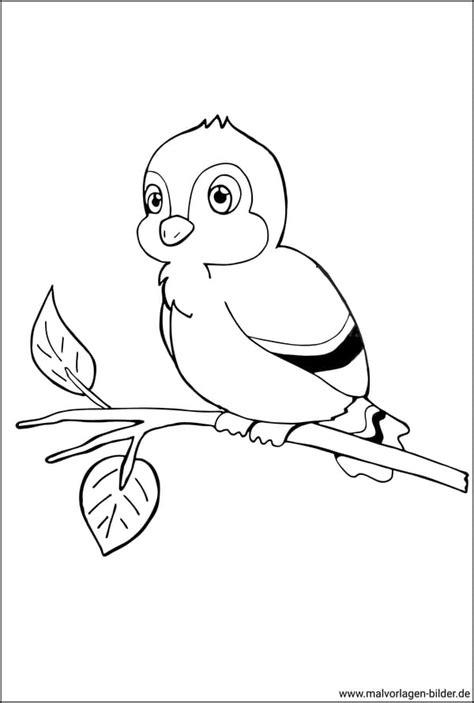 Malvorlage Vogel Auf Ast