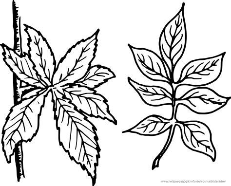 Malvorlagen Blätter Bäume