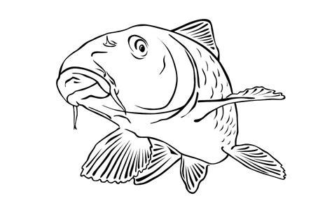 Malvorlagen Fische Karpfen