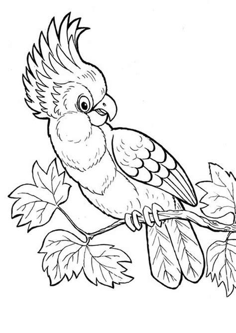 Malvorlagen Kinder Papageien