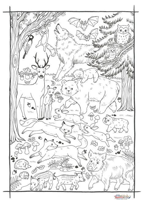 Malvorlagen Tiere Im Wald