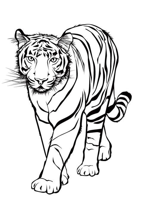 Malvorlagen Tiger Kostenlos Ausdrucken
