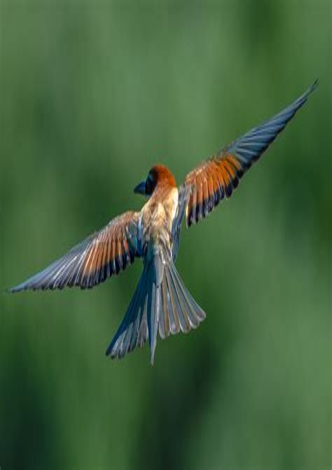 Malvorlagen Vögel Im Flug