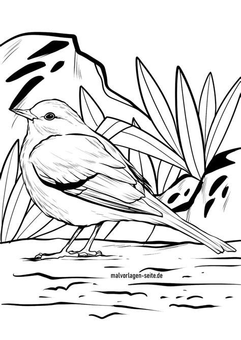 Malvorlagen Vögel Kostenlos Herunterladen