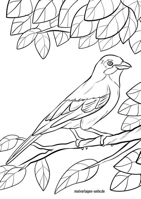 Malvorlagen Vögel Xxl
