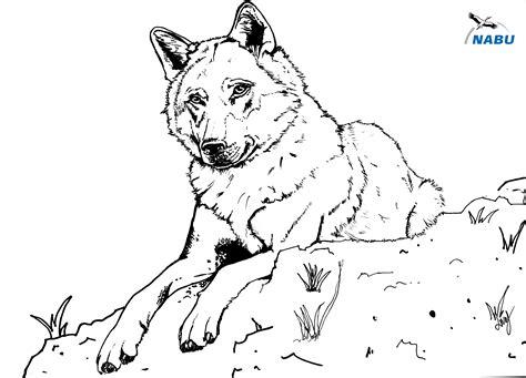 Malvorlagen Wolf Pdf