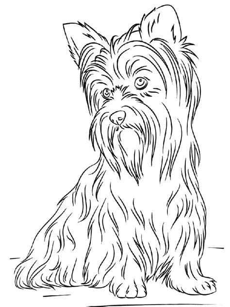 Malvorlagen Yorkshire Terrier