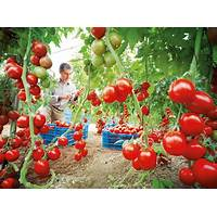 Manual de siembra y cultivo del pasto maralfalfa, taiwan y king grass reviews