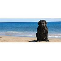 Free tutorial mastiff dog center with breeding trainer ebook