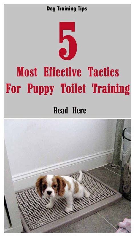 most effective way to potty train your dog.aspx Image
