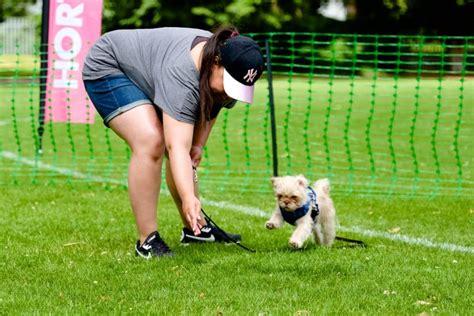nonsuch dog training ewell Image