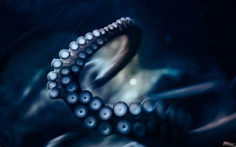Octopus Wallpaper HD Wallpapers Download Free Images Wallpaper [1000image.com]