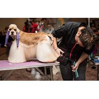 Pet grooming course programs