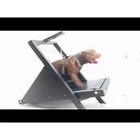 Pit bull zone training guide methods