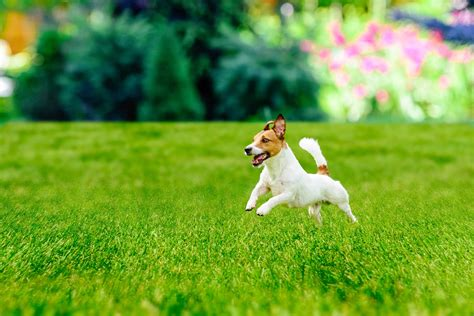 Plants For Gardens With Dogs Image