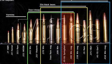Popular Hunting Rifle Calibers In Europe