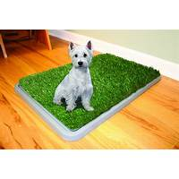 Potty train your puppy with litter box house training dogs indoors discounts