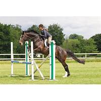 Professional horse training course solve problems fast! free tutorials