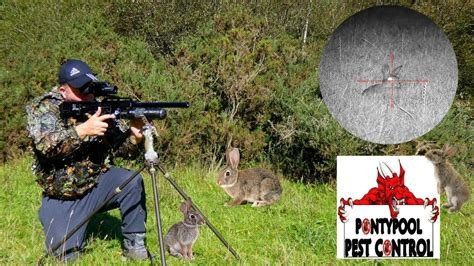 Rabbit Shooting With Air Rifle Video