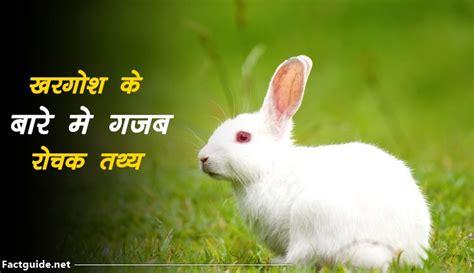 Rabbit information in hindi Image