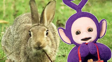 Rabbit youtube and more Image
