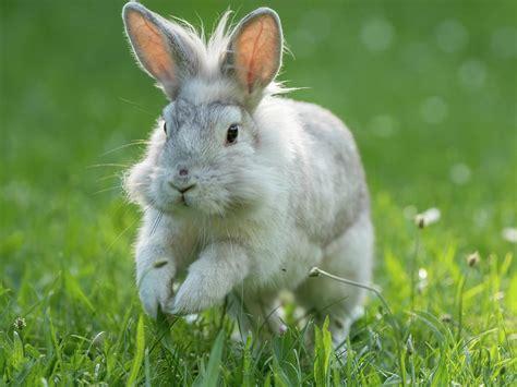 Rabbits hopping images Image