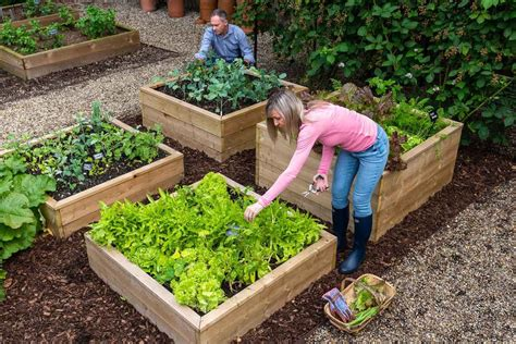 Raised wooden garden beds Image
