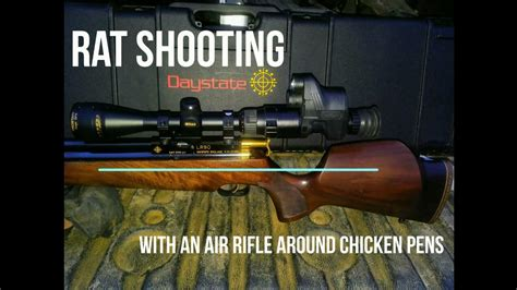 Rat Hunting With Pellet Rifle