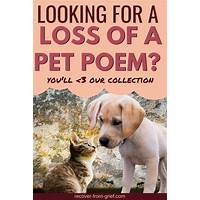 Recover from the grief of pet loss guide