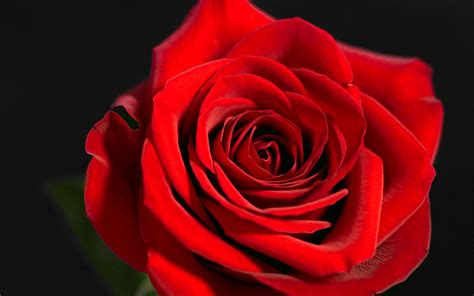 Red Rose 3d Wallpaper Glitter Wallpaper Creepypasta Choose from Our Pictures  Collections Wallpapers [x-site.ml]