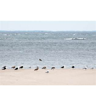 Richard Hartley Boat Plans