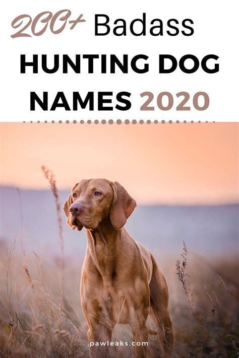 Rifle Names For Dogs And 105mm Recoilless Rifle For Sale