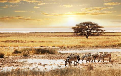 Safari Wallpaper HD Wallpapers Download Free Images Wallpaper [1000image.com]