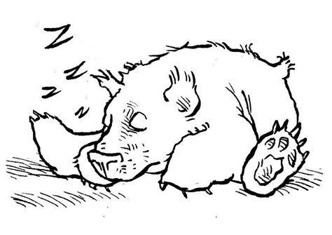 Schlafender Bär Malvorlage