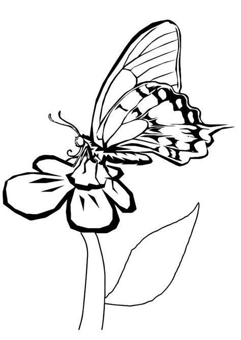 Schmetterling Auf Blume Malvorlage