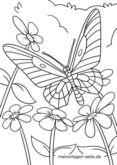 Schmetterling Malvorlagen Kostenlos